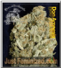 Don Avalanche Don Amnesia 5 Feminized Seeds